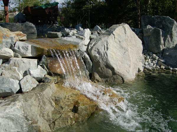 Schwimmteiche die sch ne kombination von gartenteich und for Fische im schwimmteich